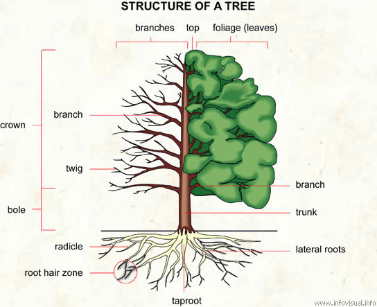 parts of a tree