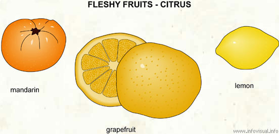 Fleshy fruit - citrus (2)