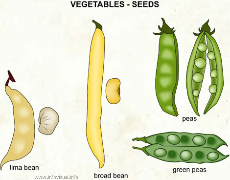 Vegetables - seeds (2)