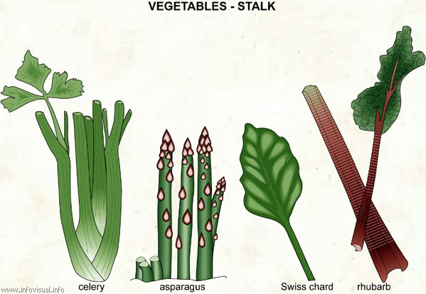 Vegetables - stalk