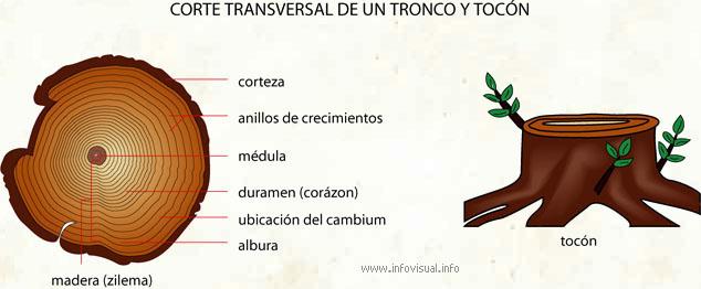 A tronco significado