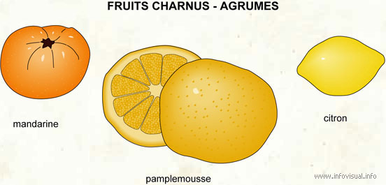 Fruits charnus - agrumes