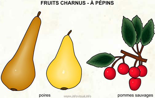 Fruits charnus - à pépins