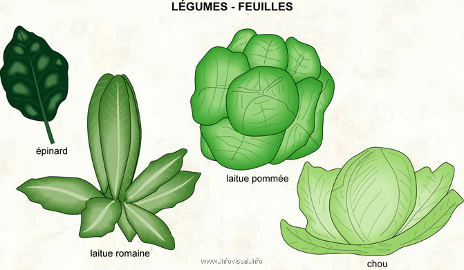 Légumes - feuilles