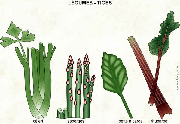 Légumes - tiges