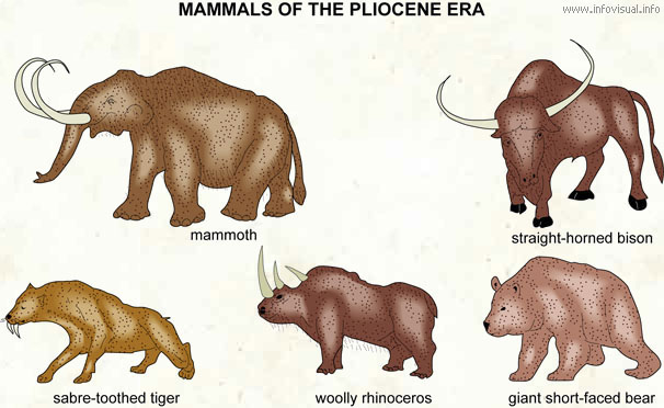 Image result for pliocene elephant