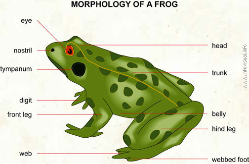 High Quality Frog   Visual Dictionary