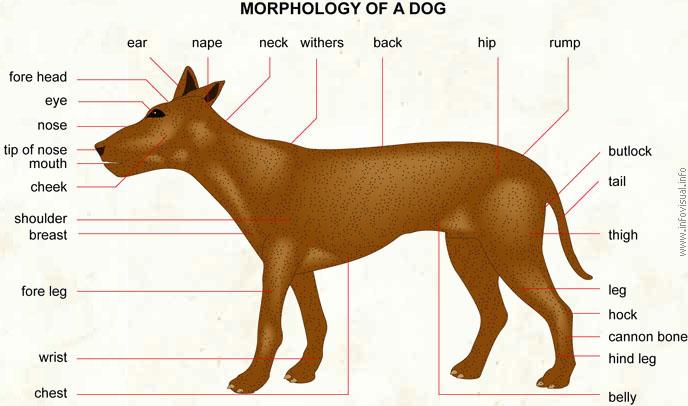 dog visual dictionary