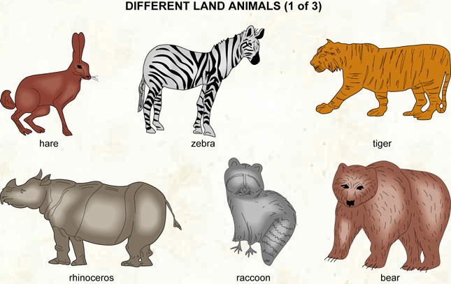 Different land animals 1