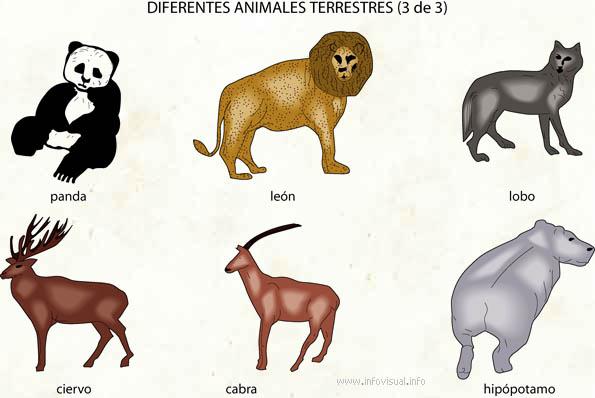 Animales de la tierra  El Diccionario Visual