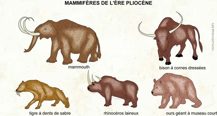 Pliocène