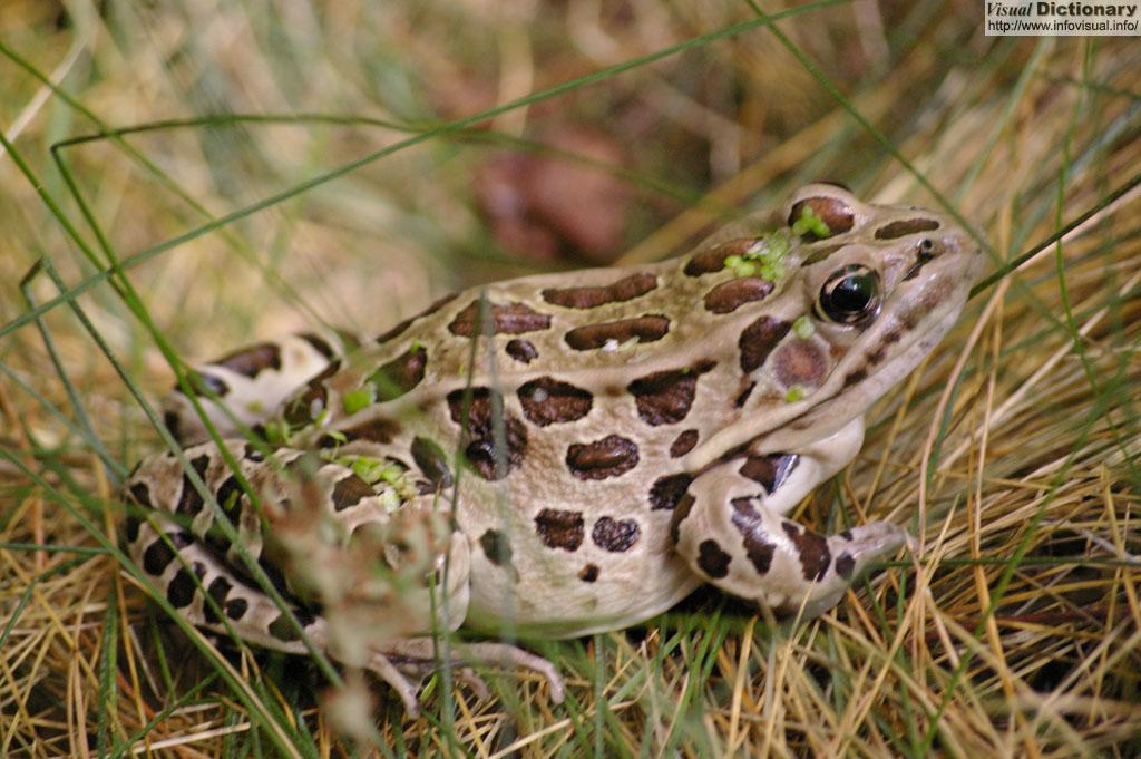 Titi et Grosminet Une grenouille dans la gorge - Coffret