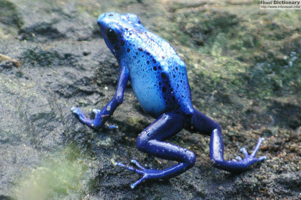 Dying 