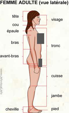 Femme adulte (vue latérale)