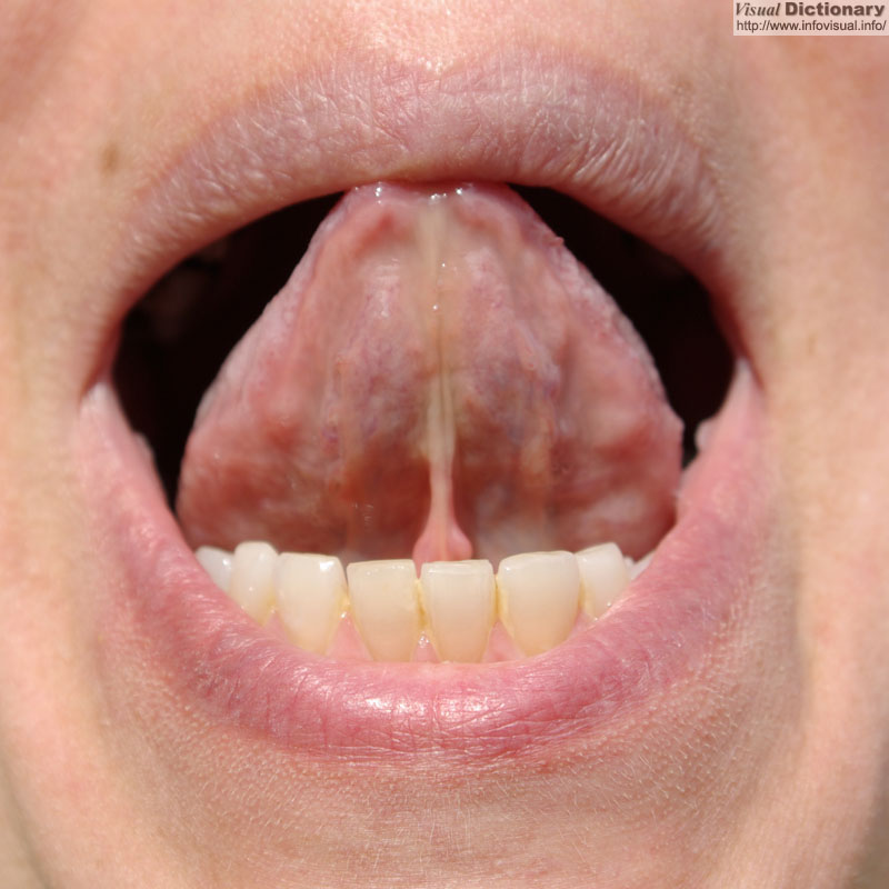 Tongue 