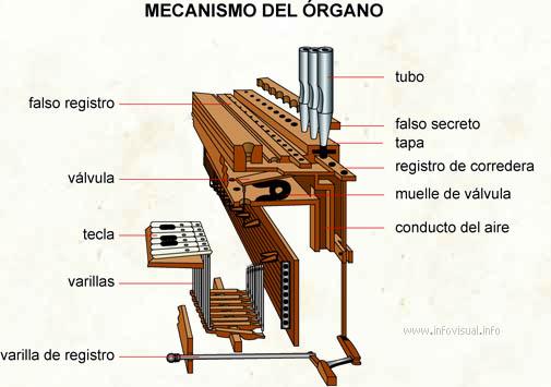 Mecanismo del órgano