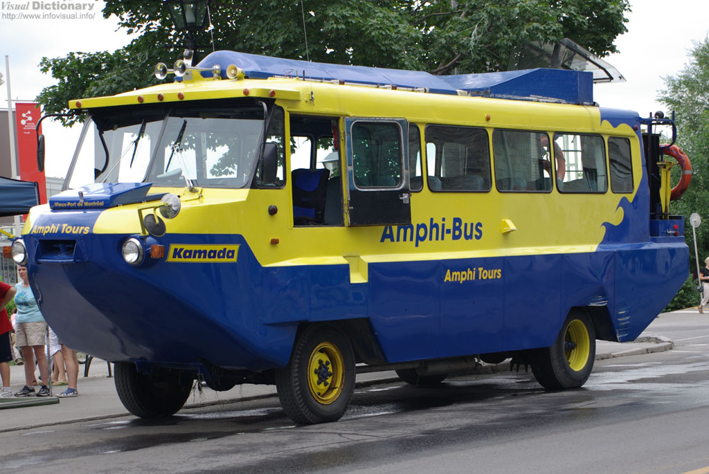 Amphibian 