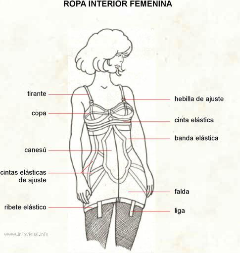 51a7c636b7a7 Ropa interior femenina - El Diccionario Visual